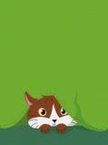 CAT HIDDEN BELOW A GREEN FABRIC. With seam Stock Image