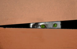 Cat hidden in a box Royalty Free Stock Photos