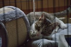 The cat in the cage. royalty free stock photography