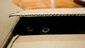 Cat hidden in cardbox Stock Photo