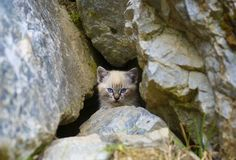 Cat hidden in  the cave Stock Images