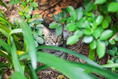 Cat hidden in the garden Royalty Free Stock Photography