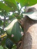 Cat hidden on a  tree Stock Photos