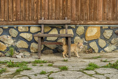 Cat hidding under a wooden chair Royalty Free Stock Photography