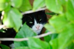 Cat hide Stock Photo
