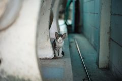Cat hide behind the bench Stock Image
