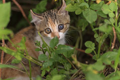 Cat hide in the grass Stock Photos