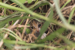Cat hide in the grass Stock Photography