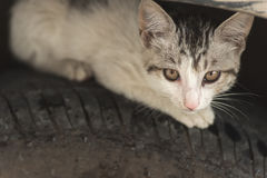 Cat hide on the tire Stock Photography