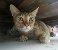 Cat hide under wooden cabinet Stock Photos