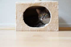 Cat in hideaway Royalty Free Stock Photo