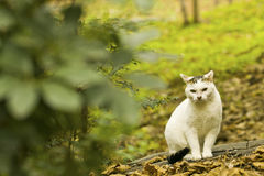 A cat hides in the forest Stock Images