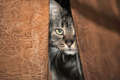 Cat hides Royalty Free Stock Images