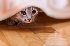 Cat hides Royalty Free Stock Photography