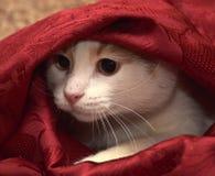 Cat Hiding Imagens de Stock Royalty Free