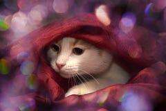 Cat Hiding Royalty-vrije Stock Foto's