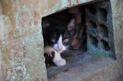 Cat Hiding Fotografia Stock