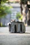 The cat in hiding bag. ,outdoor Stock Image