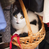 Cat hiding in a basket. A cute cat wants some time alone royalty free stock image