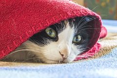 Cat hiding and basking in the plaid, funny Royalty Free Stock Images