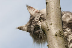 Cat hiding behind branch Stock Photo