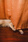 Cat hiding behind a curtain Stock Photos