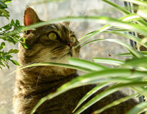 CAT HIDING BEHIND PLANTS Stock Images