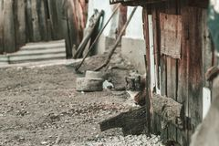 Cat hiding behind the shed at old abandoned farm. Old vintage abandoned farm background with a cat hiding behind the shed. Find the cat Stock Photo