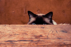 Cat hiding behind a table. Pretty cat is hiding behind a table, only his ears are visible Royalty Free Stock Image