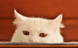 Cat hiding Stock Images