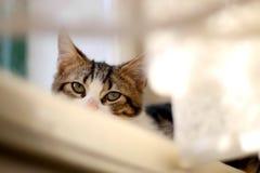 Cat Hiding imágenes de archivo libres de regalías