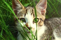 Cat hiding in grass Stock Photos