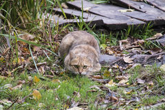 Cat hiding in grass. This cat is hiding in the dry autumn grass and thinks that I do not see it Royalty Free Stock Images