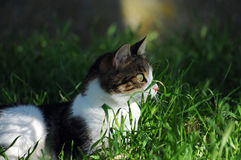 Cat hiding in the grass. Multicolor cat playing and hiding in the meadow Stock Image