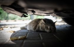 Cat hiding in the shade under a car royalty free stock photography