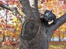 Cat Hiding negra asustadiza en un árbol, las decoraciones de Halloween y los juguetes fotografía de archivo libre de regalías