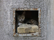 Cat. Hiding in the old mailbox Royalty Free Stock Image