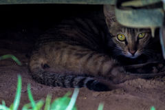 Cat hiding place Stock Photo