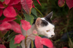 Cat hiding in red flower royalty free stock photo