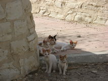 Cat hiding in the shadows on the seafront in Limassol Royalty Free Stock Photos