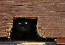Cat hiding in a shed. Cat hiding in a shed with bright eyes peeking out Stock Images