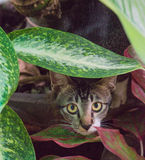 Cat hiding. Under bushes and staring Stock Photo