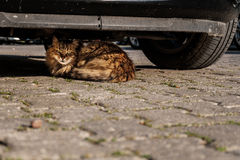 Cat hiding. A cat is hiding under a car Royalty Free Stock Photos