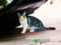 A cat hiding under a car Royalty Free Stock Images