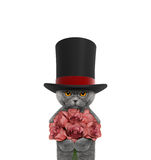 Cat in a high hat cylinder with roses. Isolated on white royalty free stock photography