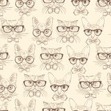 Cat hipsters seamless pattern Royalty Free Stock Image