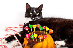 Cat with his birthday cake Royalty Free Stock Images