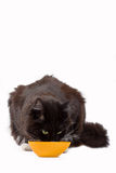 Cat and his food Royalty Free Stock Photography