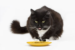 Cat and his food Stock Photography