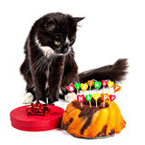 Cat with his happy birthday cake Royalty Free Stock Images
